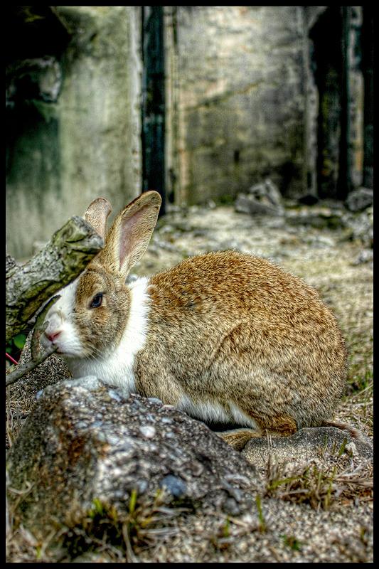 ウサギ島_c0214542_21303092.jpg