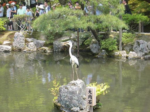 連休の京都・サツキと菖蒲のはずが、、、_f0205367_0114633.jpg