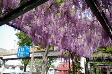 藤の花の香り_e0095468_21454328.jpg