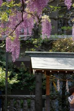 藤の花の香り_e0095468_21503328.jpg
