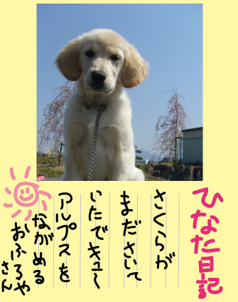c0085188_811256.jpg