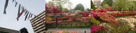 公園がたくさん (練馬区)_d0132289_15245424.jpg