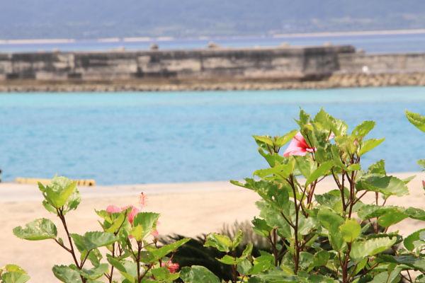 鳩真島・黒島_a0071514_23202193.jpg