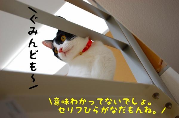 c0181639_111085.jpg