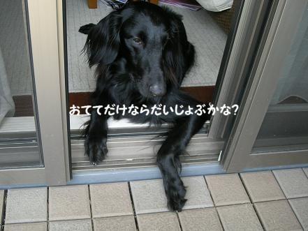 f0107145_23153520.jpg