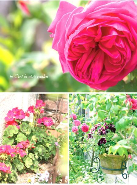 今年も花が一杯咲きました♪_d0129249_11313035.jpg