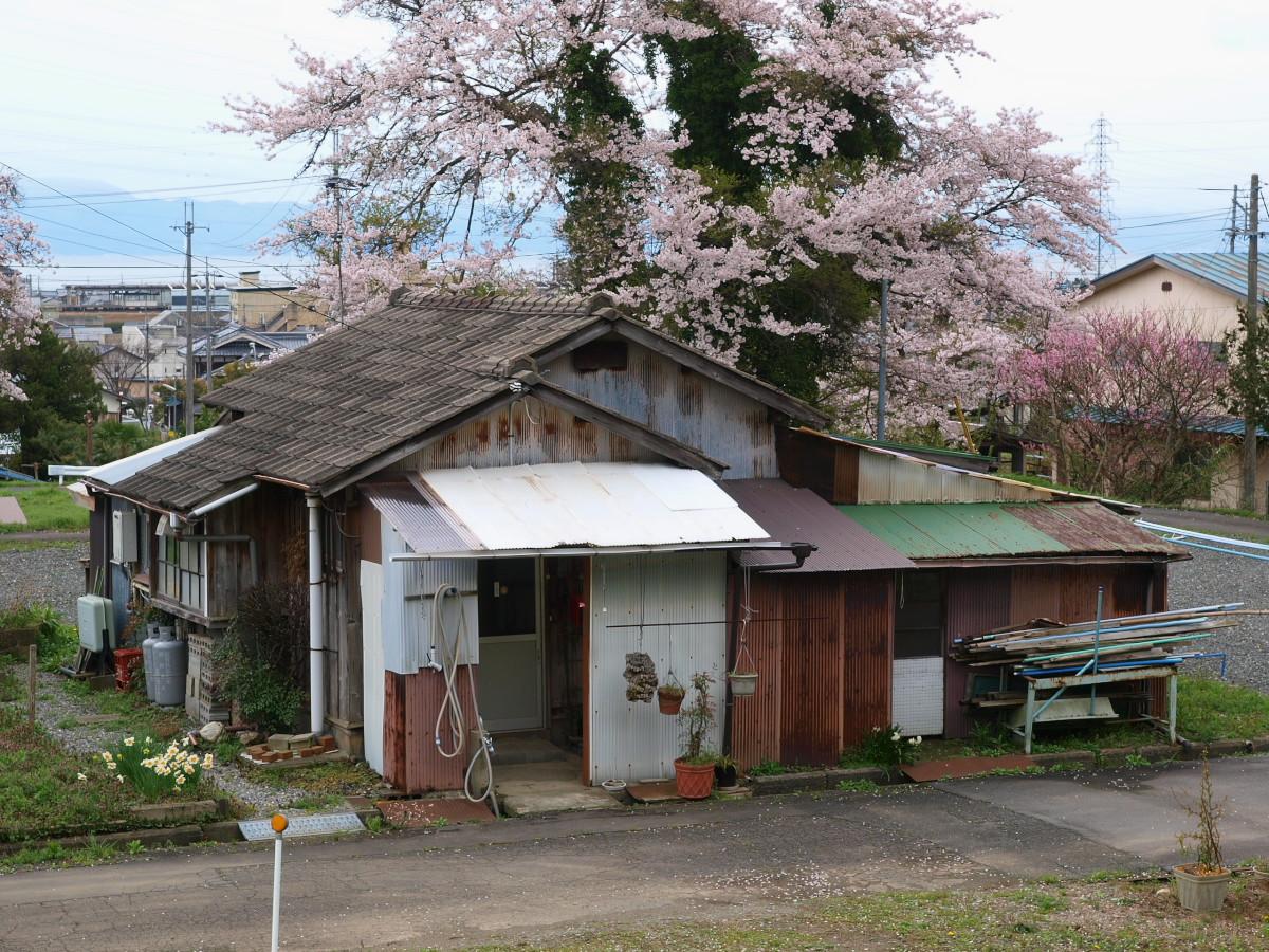 滋賀 春の琵琶湖を一周ブログ旅_f0021869_1935950.jpg