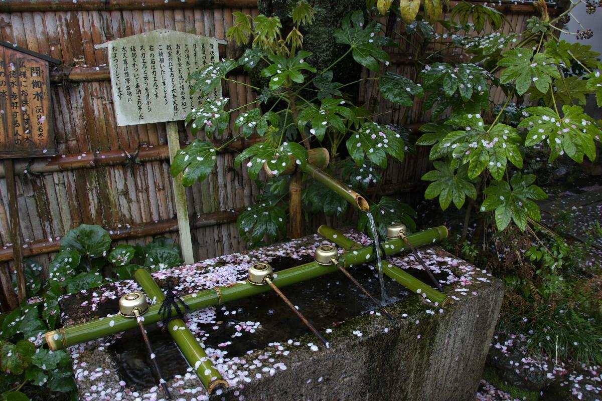 京都 雨の伏見十石舟_f0021869_19384695.jpg