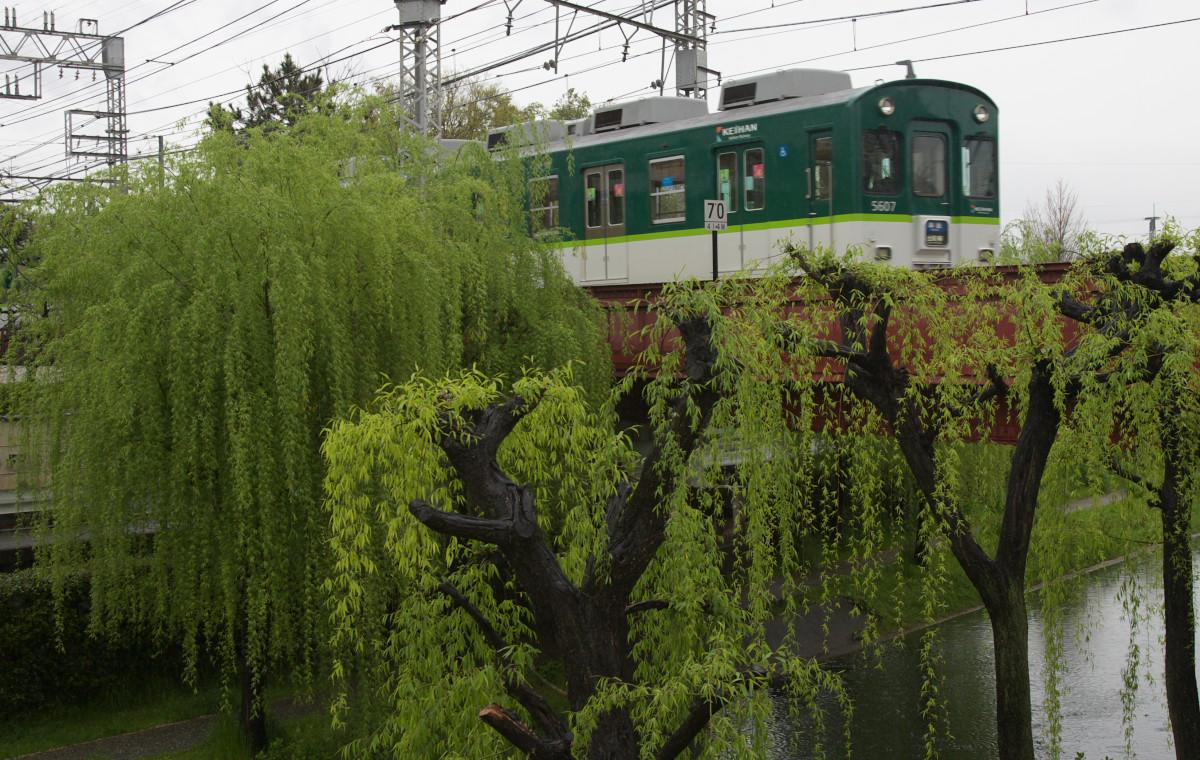 京都 雨の伏見十石舟_f0021869_19423857.jpg