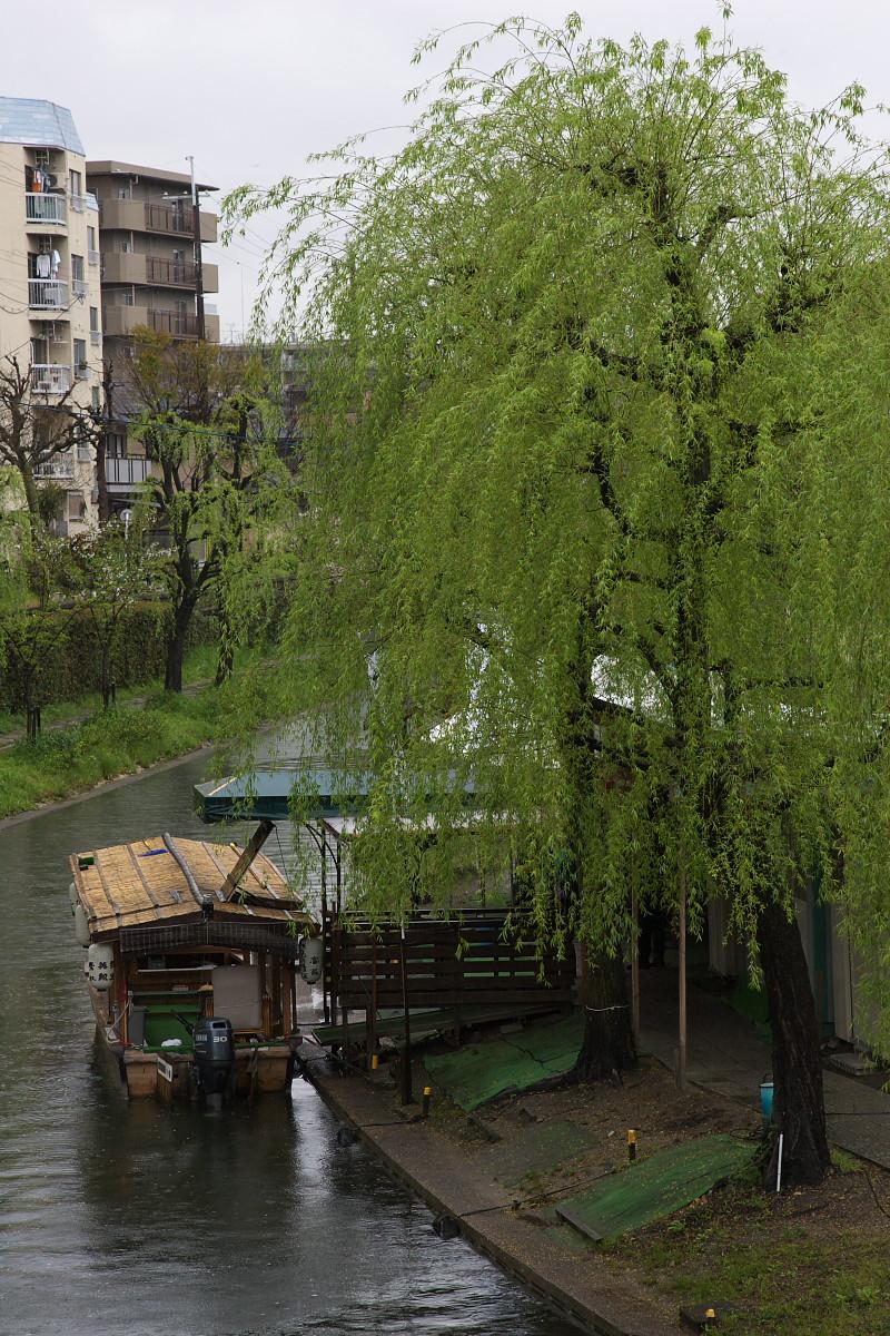 京都 雨の伏見十石舟_f0021869_19455340.jpg