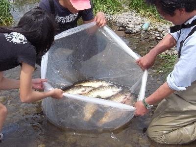 多摩川のお魚捕獲大作戦と救出大作戦_c0091679_23353042.jpg
