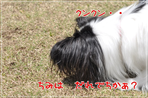 c0075585_145428.jpg