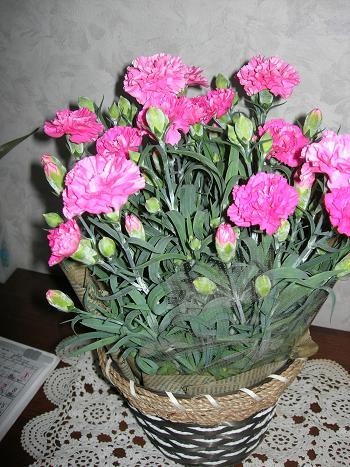 母の日の贈り物_c0011501_21165535.jpg