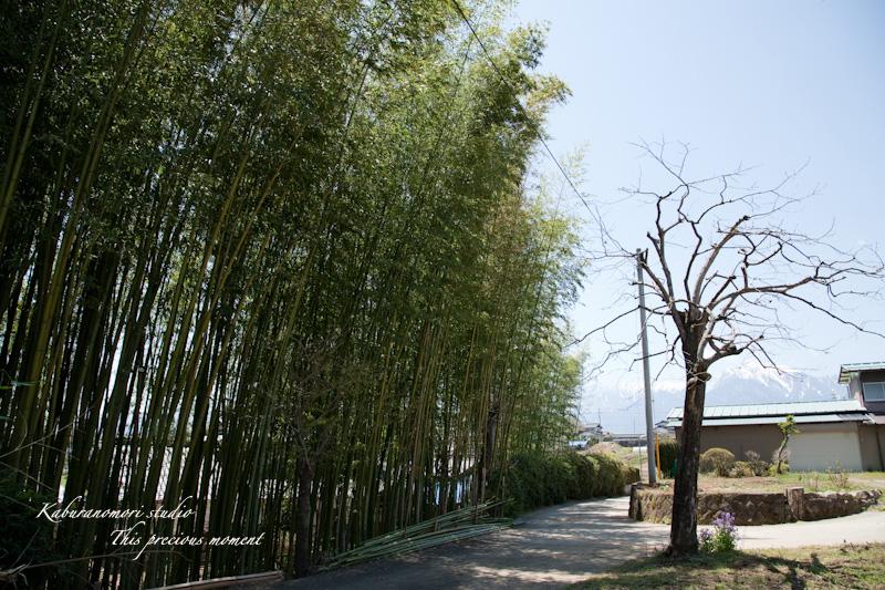 長坂で竹林整備_c0137403_1834063.jpg