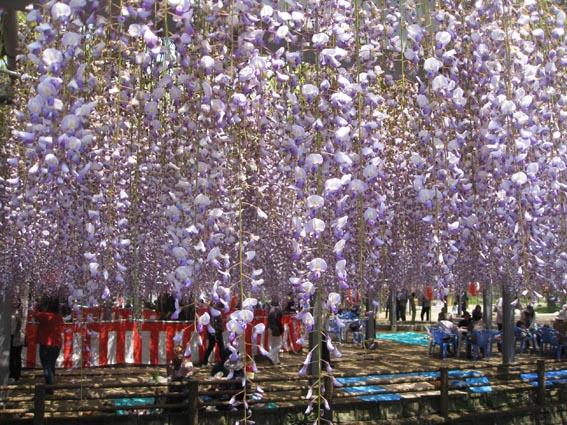 GWの花祭り_c0186612_1904161.jpg