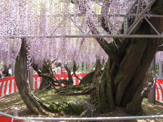 GWの花祭り_c0186612_1911130.jpg