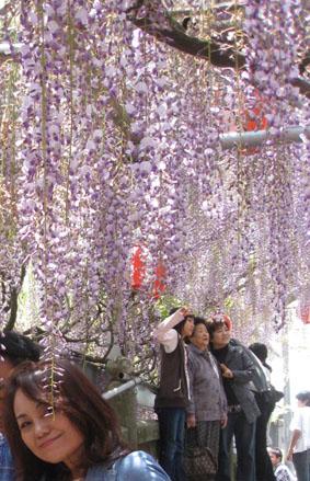 GWの花祭り_c0186612_1933522.jpg