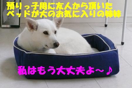 f0121712_1812614.jpg