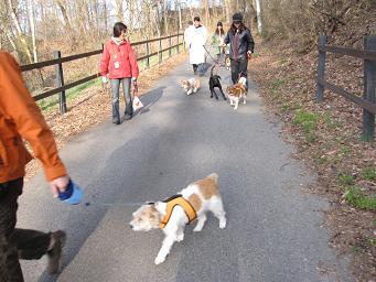 4月26日 みんなで、朝のお散歩_e0136815_10175075.jpg