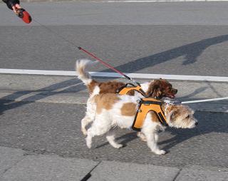 4月26日 みんなで、朝のお散歩_e0136815_1019988.jpg