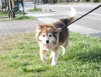 4月26日 みんなで、朝のお散歩_e0136815_10213832.jpg