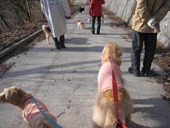 4月26日 みんなで、朝のお散歩_e0136815_10432327.jpg