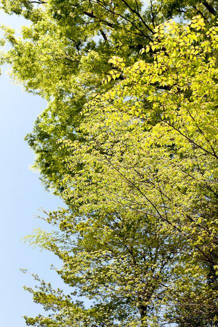 緑_f0077521_0195991.jpg
