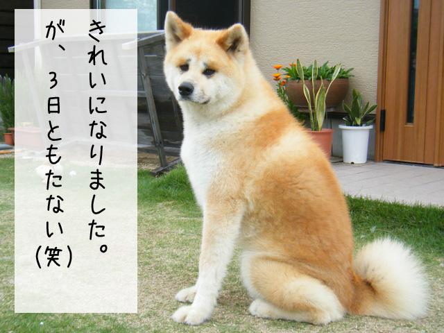 f0008935_17295496.jpg