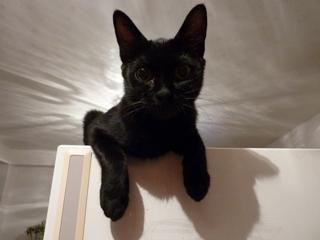 ちょんちょん猫 ろった編。_a0143140_22424286.jpg