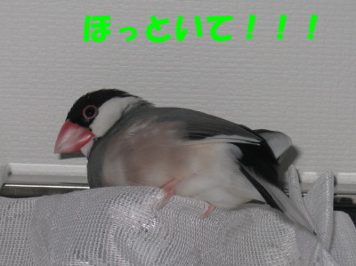 b0158061_2082018.jpg