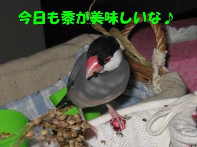 b0158061_2083775.jpg