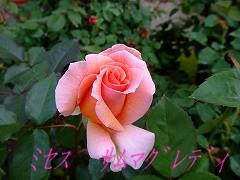 a0104162_20524635.jpg