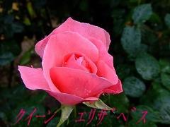 a0104162_2055178.jpg