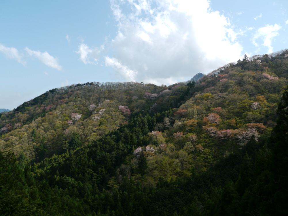 ホソオチョウ 春型は特に小さいね。  2010.4.29狭山丘陵_a0146869_6414481.jpg