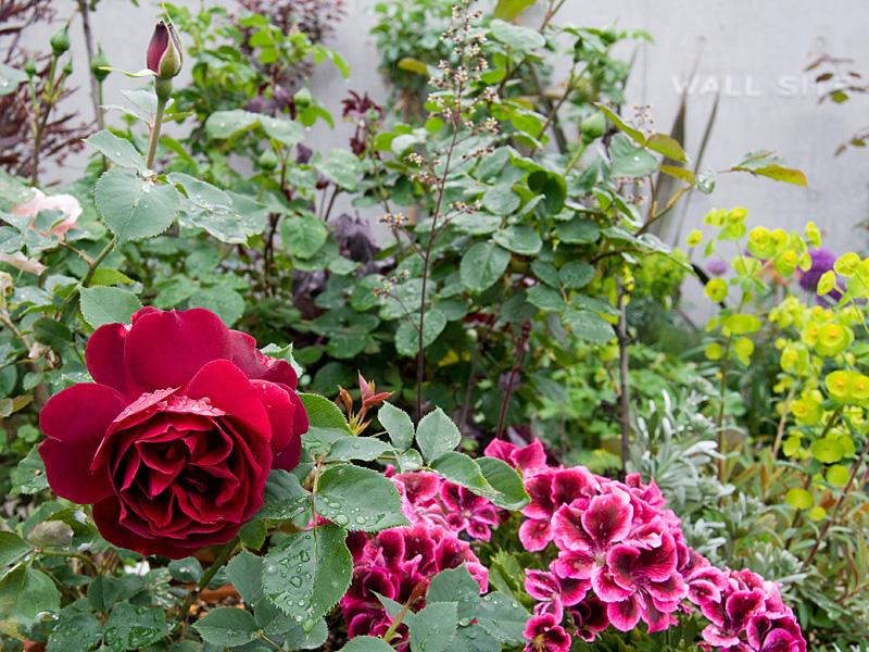 乙薔薇 2010 Pt.1 フランシス デュブリュイ_f0191870_17592015.jpg