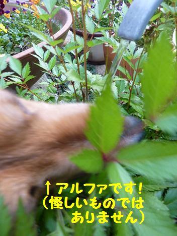 c0189388_93934.jpg