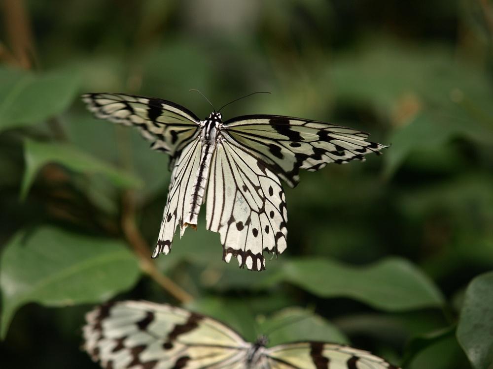 「箕面公園昆虫館 その2」_a0133692_0302554.jpg