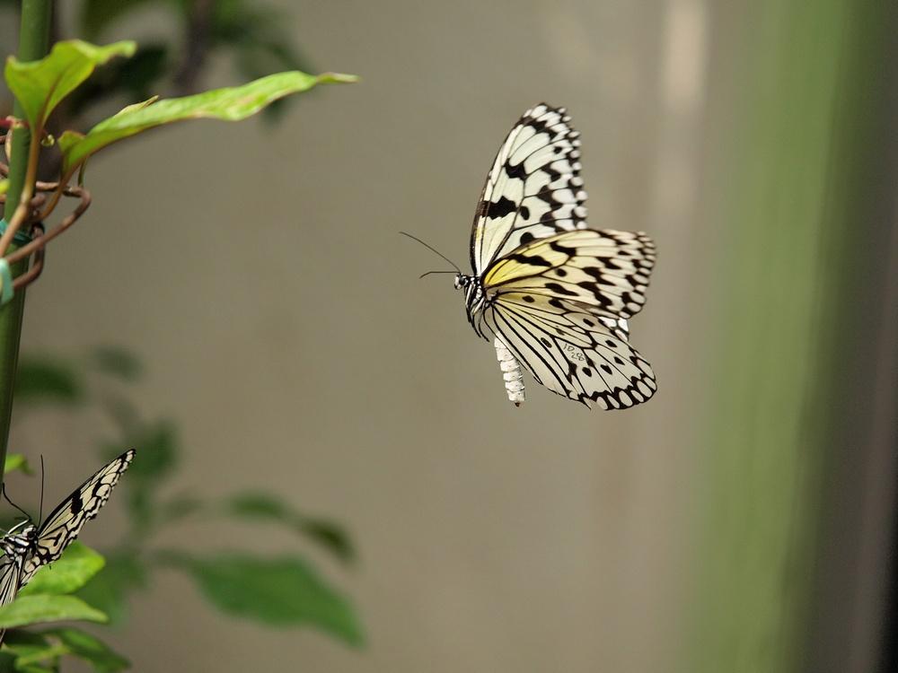「箕面公園昆虫館 その2」_a0133692_034384.jpg