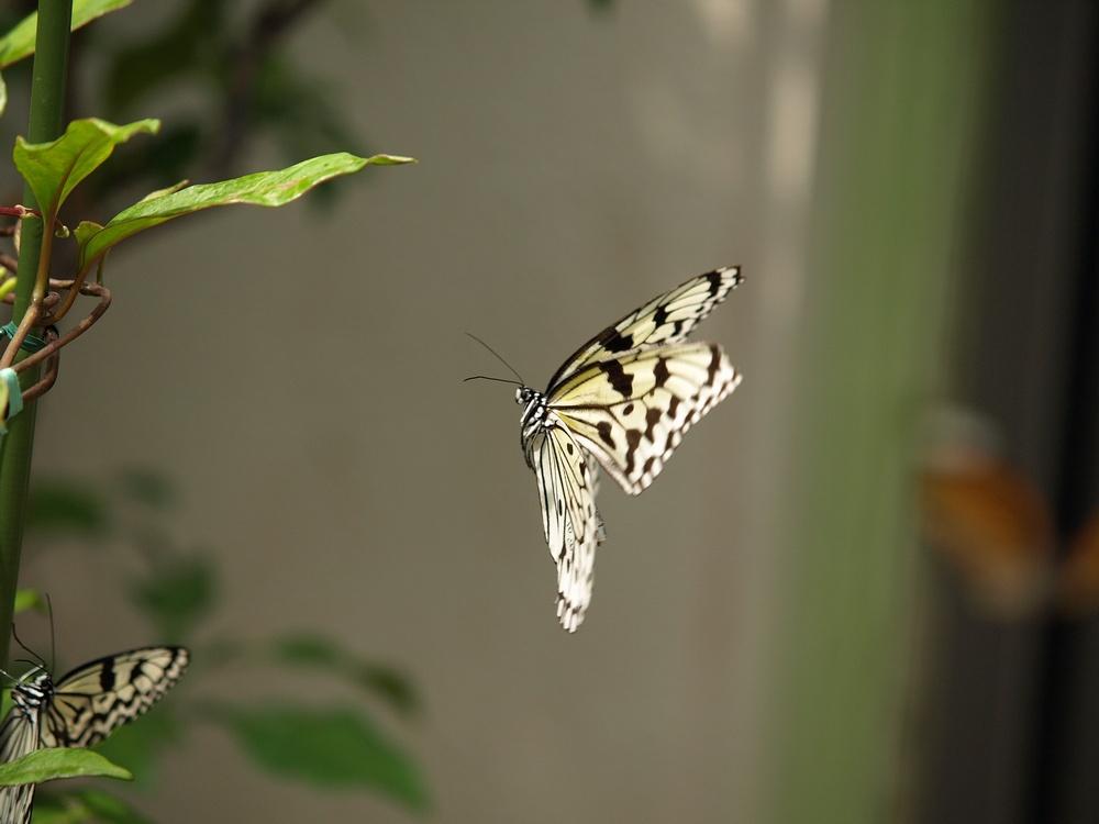 「箕面公園昆虫館 その2」_a0133692_0353370.jpg
