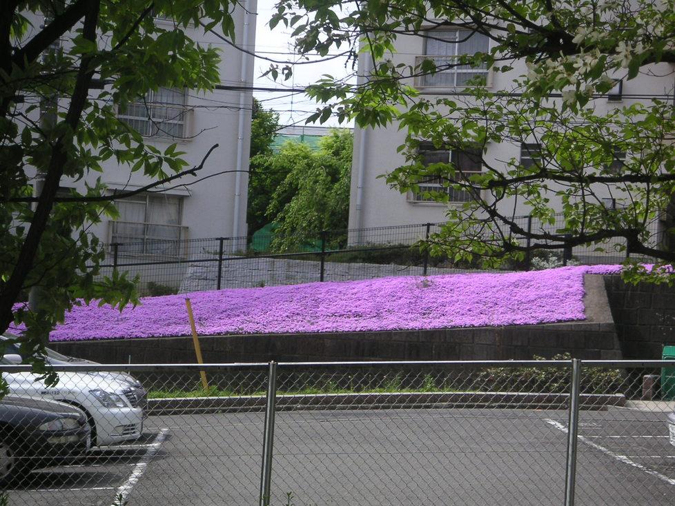 芝桜_e0017093_16422719.jpg