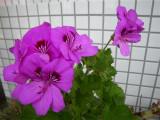 今年も花が咲きました_d0130212_14132390.jpg