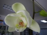 今年も花が咲きました_d0130212_1451642.jpg