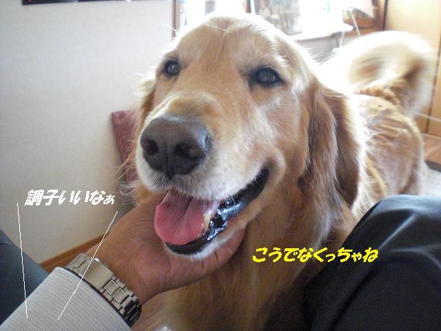 f0114128_15393337.jpg