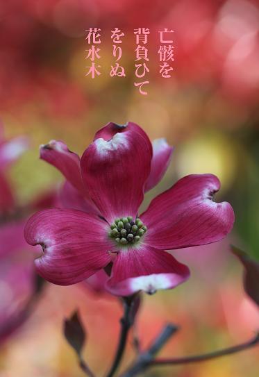 f0100234_20123565.jpg