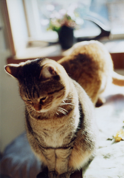 腰が低い猫_c0157248_12224583.jpg