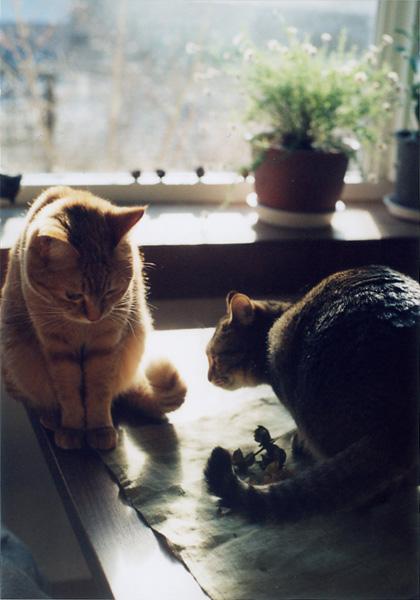 腰が低い猫_c0157248_12225297.jpg