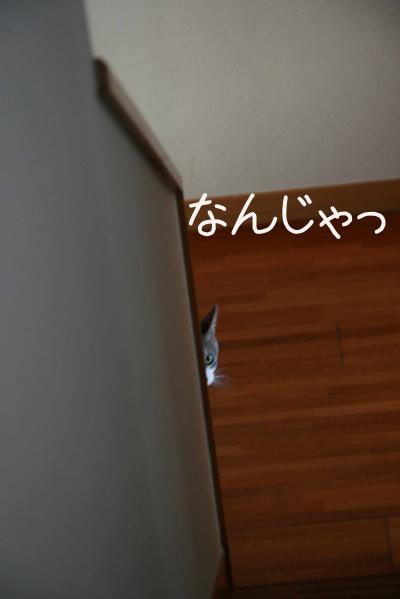 f0226561_7493284.jpg