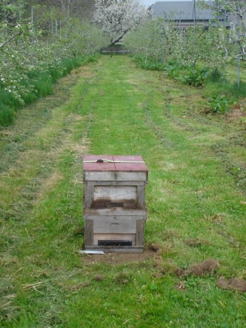 ミツバチがきた_e0019167_21223087.jpg