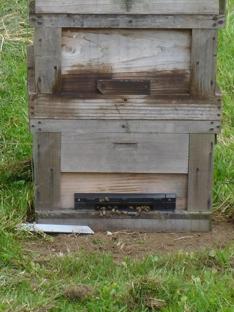 ミツバチがきた_e0019167_21232385.jpg