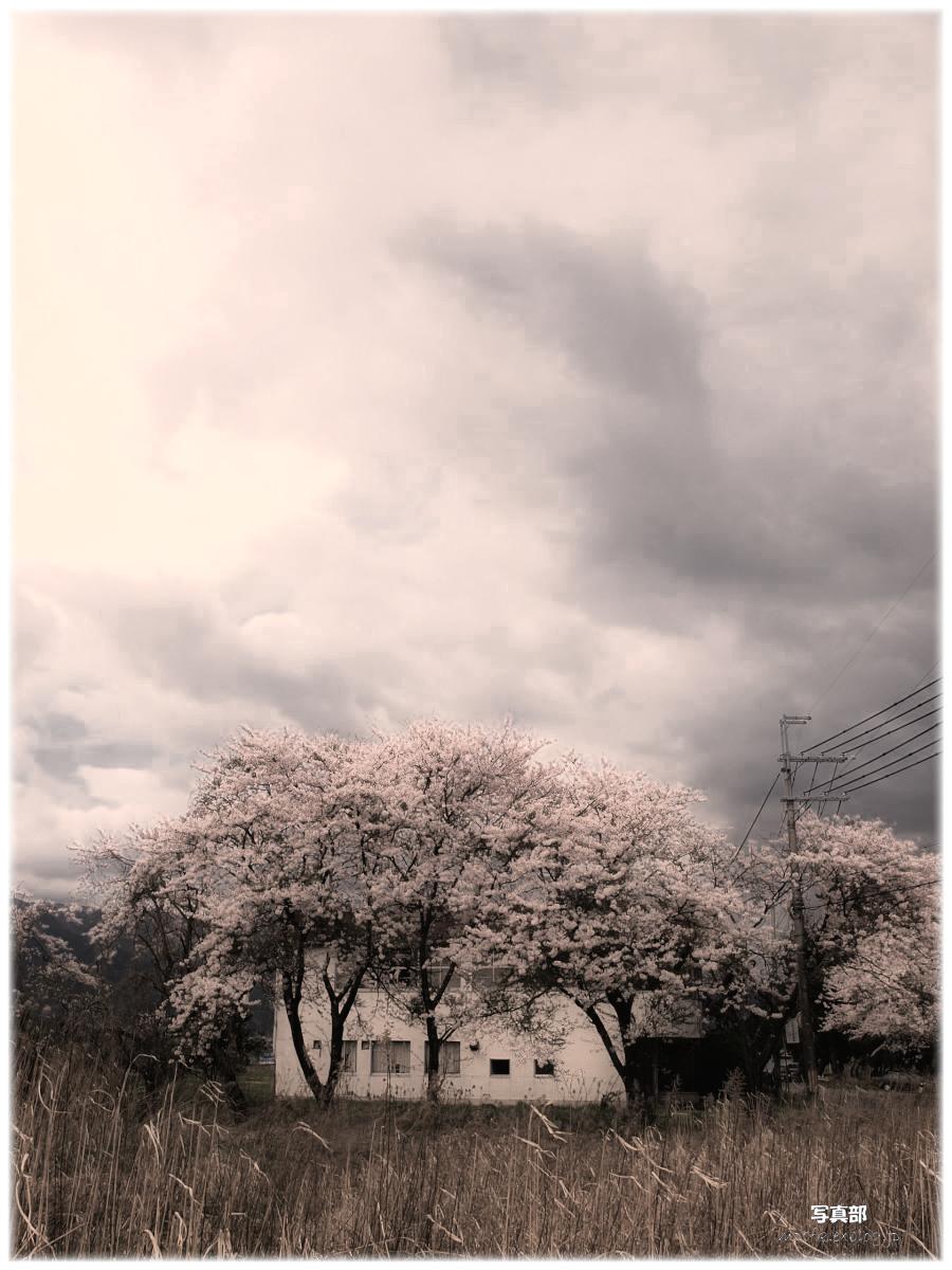滋賀 春の琵琶湖を一周ブログ旅_f0021869_9154734.jpg